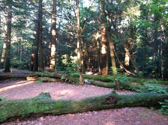 Jim Thorpe Camping Resort: Wood view