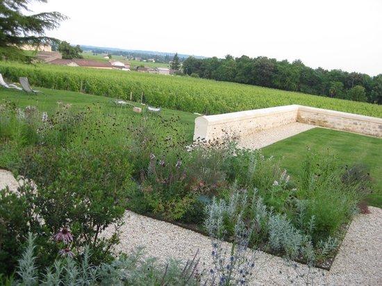 L'Atelier de Candale: Surrounded by vines