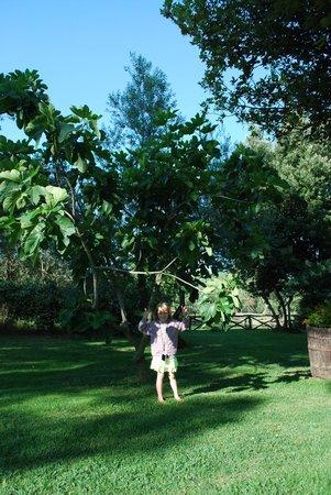 Il Pozzo Romano : Big fig three in the garden