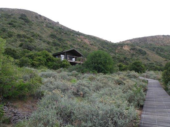 HillsNek Safaris, Amakhala Game Reserve: Our tent