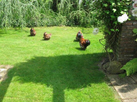 Den Overkaent: Kippen waren er ook