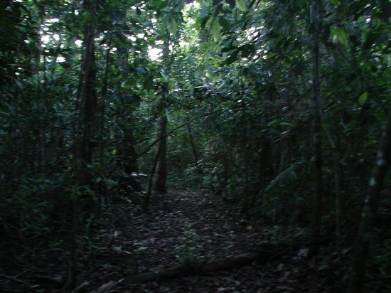 Hickatee Cottages : Jungle trail