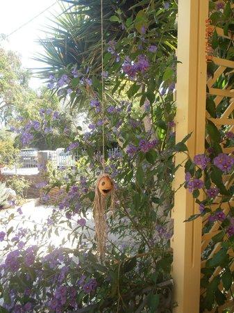 Mylos Apartments: Λουλουδια...