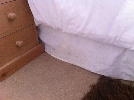 The Fox: Dirty stained bed valance