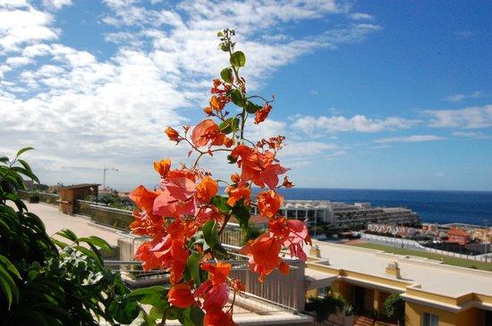 Be Live Family Costa los Gigantes: В отеле много растений, это бугенвиллея (здесь она красная)
