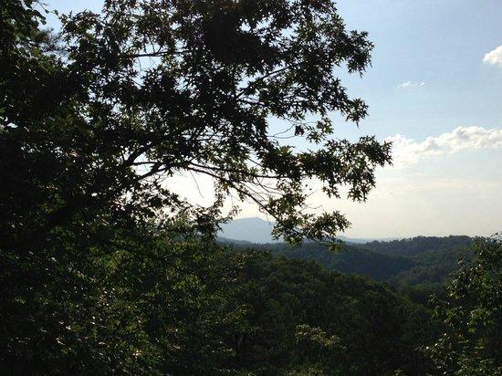 Whisperwood Farm B&B, Creekwalk Inn and Honeymoon Cabins: So much beauty!
