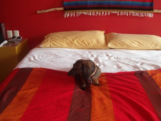 Bahia Tortuga: Our Comfy Bed with a special friend