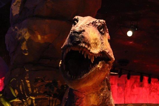 Dinossauro em animatronics fotograf a de t rex orlando for T rex location
