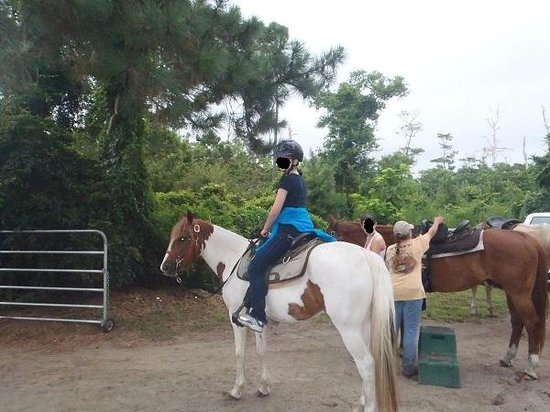 Equine Adventures: After mounting up :) This is the sweetest pony, Gizmo! I don't have the pictures from the beach