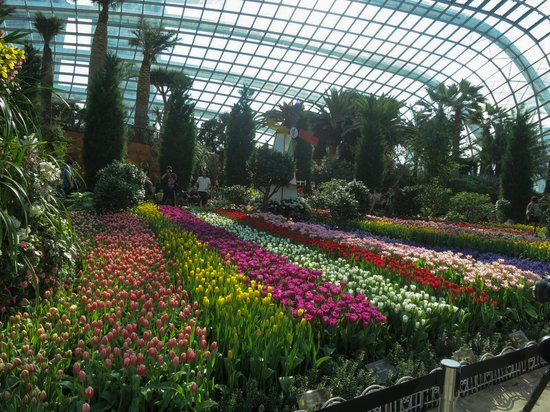 gardens by the bay tulip festival in the flower dome