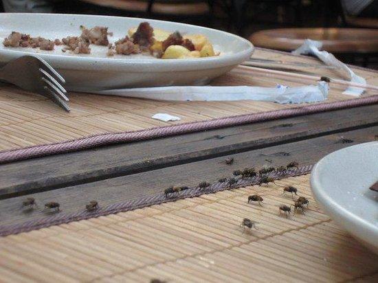 Le Roc du Berger : les mouches à table
