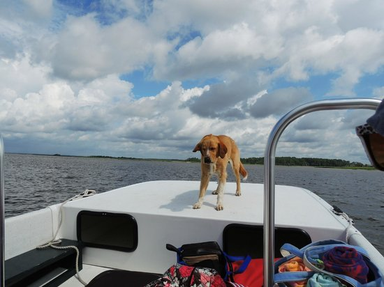 May River Excursions: This dog knows to get down when a boat goes by.