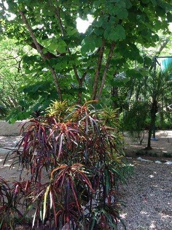 Hotel El Manglar: Gardens
