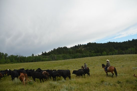 Granite Creek Guest Ranch: Moving cattle