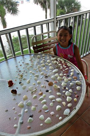 Crescent Arms Condominiums: Seashell treasures drying on our balcony!  302 N Crescent Arms