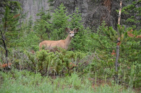 Kirwin Ghost Town Tours: One of the deer on the drive