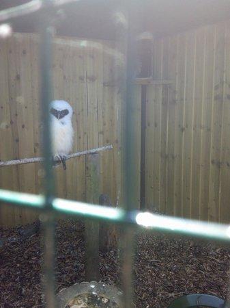 Bodafon Farm Park : owl