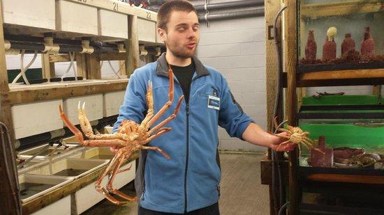 Bonne Bay Marine Station: Male and female crab. Female is the BIG one