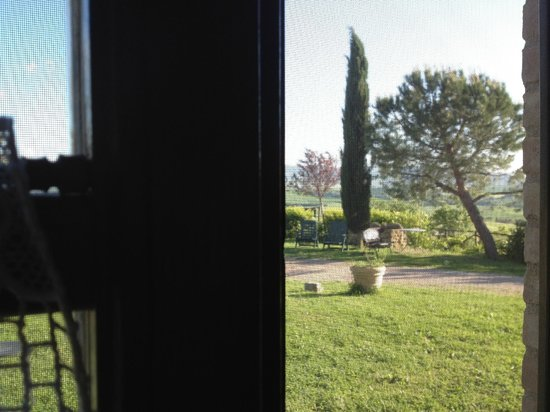 Poderuccio: View of Italian cypress from our window .