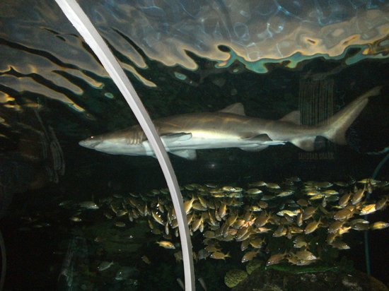 Ripley's Aquarium of the Smokies: Fish parting for the shark to go by