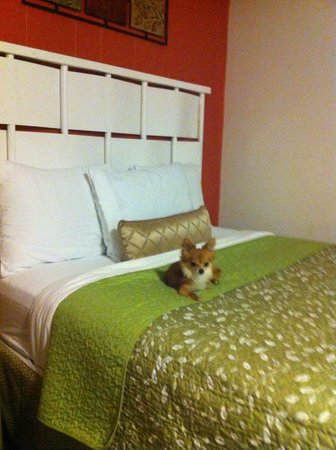 Sunset Motel: Patchouli thought the beds were comfortable and cozy.
