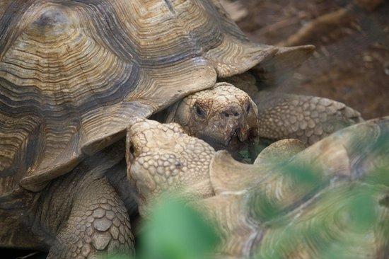 Zoo Ave: Tortoise