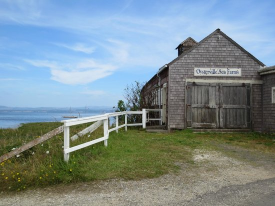 Oysterville Sea Farms: Nice location