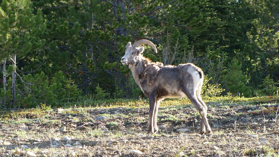 Alaska Highway: Mt. Goat by Stone mountain