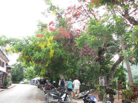 The Apsara: Streets of Luang Prabang