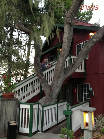 Cambria Shores Inn: Spanish Moss