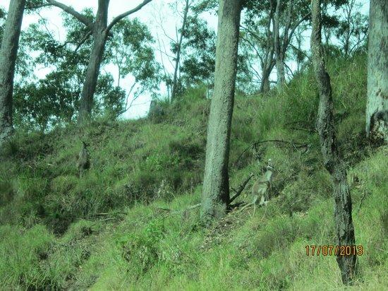 JPT Tour Group: Wild wallabies
