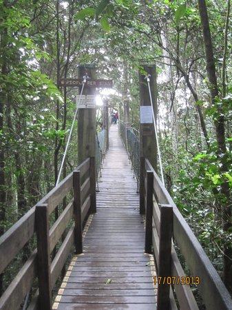 JPT Tour Group: Tree top walk