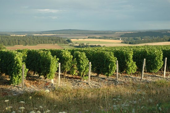École de langues CSur de France : Vineyards on the Edge of Town