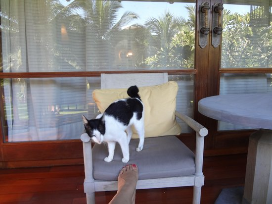Four Seasons Resort Langkawi, Malaysia: the curl tail kitty that followed me back