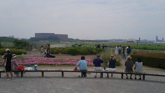 Sanrizuka Sakura no Oka: 公園ベンチ