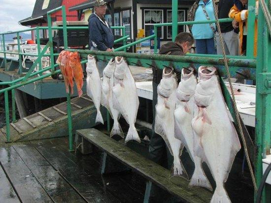 Fresh Catch Cafe: The very fresh catch