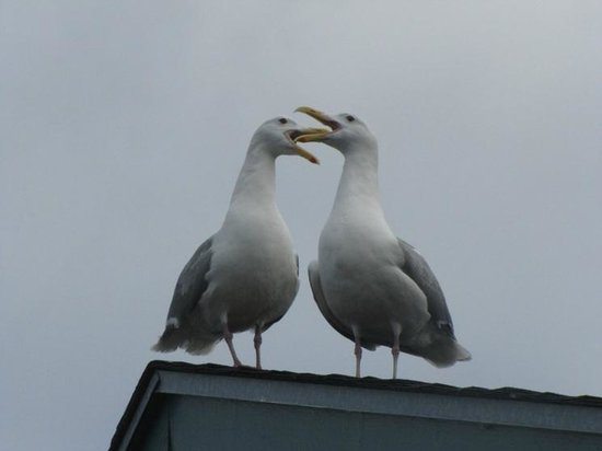Fresh Catch Cafe: Seagulls on top of the restaurant's roof