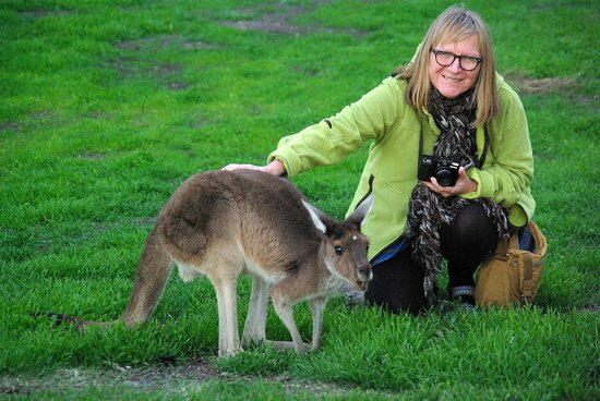 Perths La Casa Rosa Bed and Breakfast: Stroking a kangaroo from the island