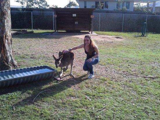 Lone Pine Koala Sanctuary: kangaroo