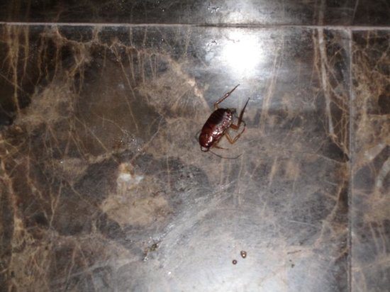 Atlantida Apartments: Cockroach I killed in bathroom that was not removed by housecleaning