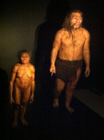 Musee de Prehistoire des gorges du Verdon : homme de Néanderthal