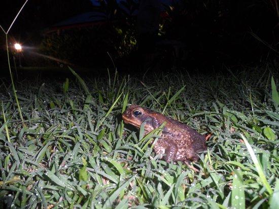 Fleurs des Iles : Night visitor