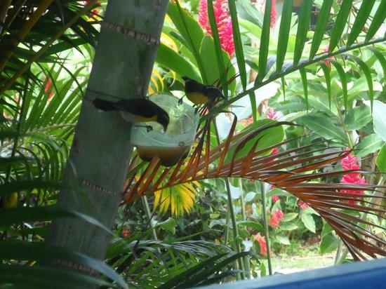 Fleurs des Iles : Bird feed