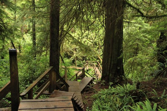 Schooner Cove: Schooner Trail