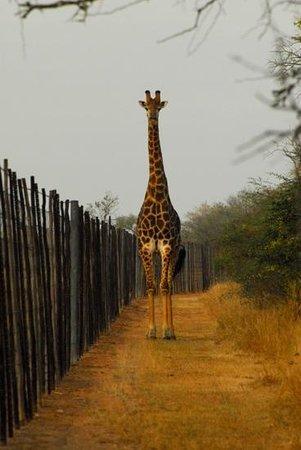Hlane Royal National Park: Add a caption