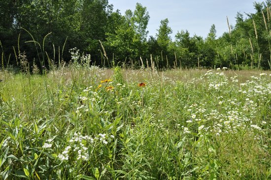 Vermont Wildflower Farm: fields of mixed wild flowers