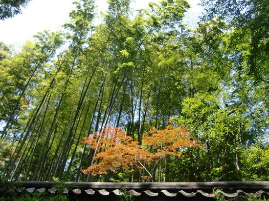 Todoroki Valley: まるで京都みたい