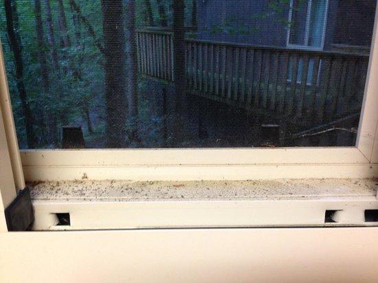 Unicoi State Park & Lodge : Dusty windows