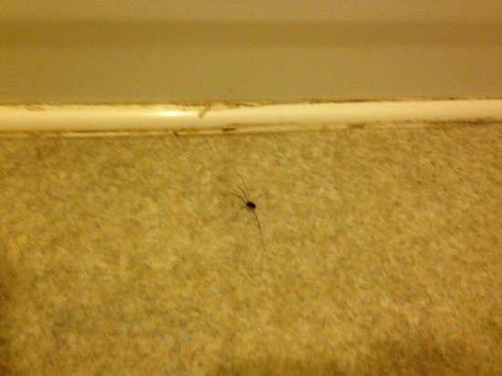 Unicoi State Park & Lodge : The many bugs that was in the cabins