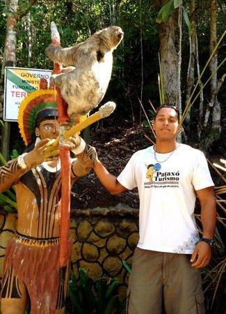 Reserva Pataxo da Jaqueira : Bicho Preguiça na Jaqueira.